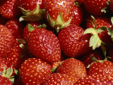 Close-up of Fresh Red Strawberries Glistening in the Sun Photographic Print by Brian Gordon Green