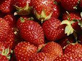 Close-up of Fresh Red Strawberries Glistening in the Sun Lámina fotográfica por Green, Brian Gordon