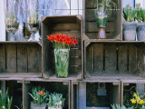 Tulips in Vases Atop Makeshift Wooden Crates Photographic Print by Sisse Brimberg