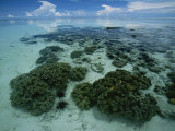Coral Reef at Low Tide off of Kapalai Island Photographic Print by Tim Laman