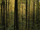 Woodland Scene Photographic Print by Randy Olson