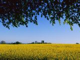 Spectacular Field of Yellow Wildflowers Photographic Print by Sisse Brimberg