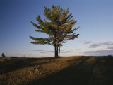A Tree Stands Alone in the Twilight Photographic Print by Raymond Gehman