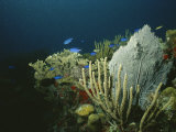 A View of an Active Reef with Corals, Fish, Sea Fans, Etc Photographic Print by Raul Touzon