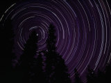 Star Streaks Above Silhouetted Trees Photographic Print by Michael Nichols