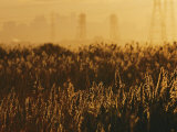 The Marshes of the Meadowlands Glitter with Sunlight, Photographic Print