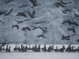 Canada Geese Gather in a Snowy Field in Tennessee Photographic Print by Karen Kasmauski