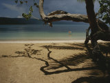 A Tangle of Tree Limbs Create Shadows on a Dominican Republic Beach Photographic Print by Raul Touzon