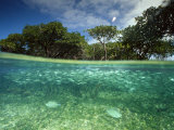 Aquatic Split-Level View with Fish and Mangroves, Australia Photographic Print by Joe Stancampiano