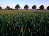 Field with a Line of Trees in the Background Photographic Print by Sisse Brimberg