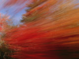 A Panned View of a Deciduous Forest in Fall Colors Photographic Print by Nick Caloyianis