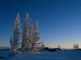 Spruce Trees (Picea Species) are Covered in Hoarfrost Along the Hudson Bay Coast Photographic Print by Norbert Rosing