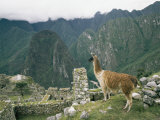 Llama Stands Near the Ruins Photographic Print by Mattias Klum