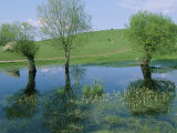 Marshy Area Near the Lejre Open-Air Museum Photographic Print by Sisse Brimberg