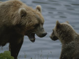 An Adult Grizzly Greets Her Young Cub Photographic Print by Karen Kasmauski