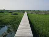 Walkway Above Wetlands Photographic Print by Stephen Alvarez