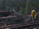 Logging Near Salmon, Idaho Photographic Print by Joel Sartore