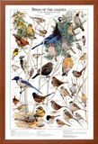 Birds of the Garden Winter II Posters