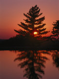 Sunset Silhouettes a Tree Near Ridgedale Photographic Print by Richard Nowitz
