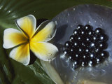 Black Pearls and Hibiscus Flower Fotografisk tryk af Paul Chesley