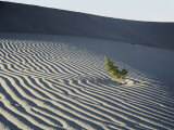 Sand Dunes Photographic Print by Marc Moritsch