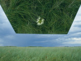 A Mirror Helps Show a Threatened Western Prairie Fringed Orchid in a Sea of Grass Photographic Print by Joel Sartore