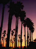 Silhouetted Palm Trees at Sunset Photographic Print by Marc Moritsch