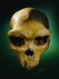 The Skull of an Prehistoric Man Photographic Print by Kenneth Garrett