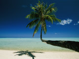 A Single Palm Tree Grows Horizontally Across the Beach Photographic Print by Jodi Cobb