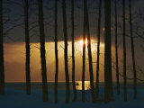 Setting Sun Seen Through a Grove of Trees Photographic Print by Steve Raymer