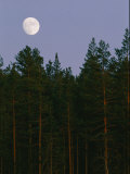 A Huge Moon Rises over an Evergreen Forest Photographic Print by Mattias Klum