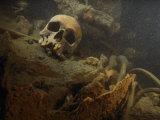 A Human Skull Lies Inside the Wreckage of a German U-Boat Fotografisk tryk af Brian J. Skerry