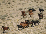 A Herd of Wild Horses Gallops Across the Dry Terrain Photographic Print by Melissa Farlow