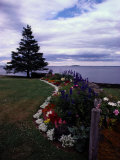 Flower Bed and Tree Overlooking the Water Photographic Print by Sam Abell