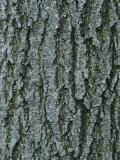 A Close View of Tree Bark in Rock Creek Park in Washington, Dc Photographic Print by Taylor S. Kennedy