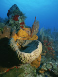 A View of a Colorful Reef Photographic Print by Raul Touzon