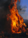 Flames from a Prescribed Fire Burn Trees and Sagebrush Photographic Print by Melissa Farlow