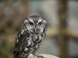 Close-up of an Owl Photographic Print by Vlad Kharitonov