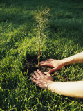 A Person Plants a Tree Seedling Photographic Print by Scott Sroka