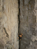 A Shirtless Rock Climber Scales an Almost Vertical Cliff Face on the North Shore of Lake Superior Fotografisk tryk af Paul Chesley