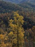 Autumn Colors Paint a Beautiful Fall Forest Landscape Photographic Print by Bates Littlehales