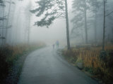 A Woman Leads Her Toddler Down a Paved Trail in the Fog Photographic Print by Randy Olson