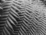 Fern Fronds Create Patterns Photographic Print by Sisse Brimberg