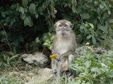 Portrait of a Monkey Photographic Print by Vlad Kharitonov