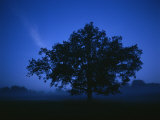 Tree on a Summer Night Photographic Print by Mattias Klum