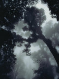 View in the Monteverde Cloud Forest Photographic Print by Steve Winter
