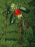 Graines et fleurs tropicales provenant de la forêt de nuages et mangées par de resplendissants quetzals Photographie par Steve Winter