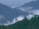 Cloud Forest, Central America Photographic Print by Steve Winter
