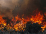Flames Consume Trees and Brush in a Controlled Burn Photographic Print by Melissa Farlow