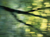 Panned View of a Tree Photographic Print by Phil Schermeister